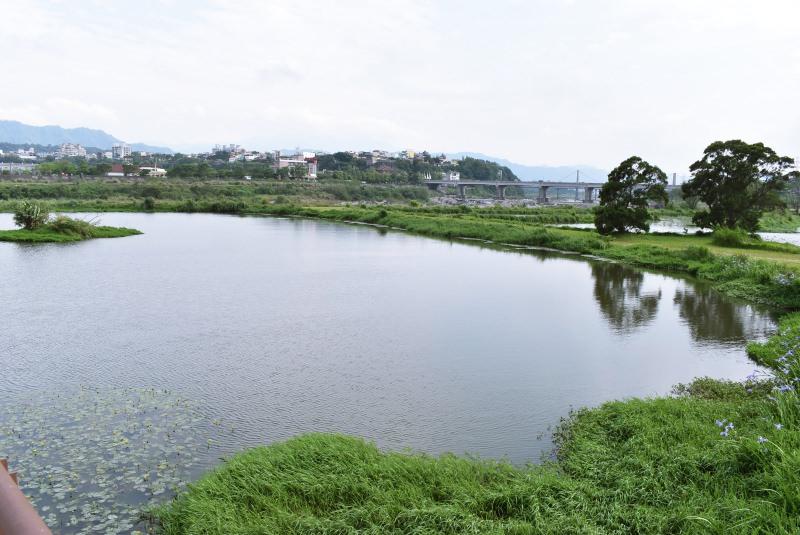  Momoco專欄 秘境!適合野餐還能淨化大漢溪污水的大嵙崁人工溼地